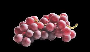 Uva con semi Red Globe